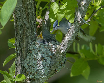 Photograph - Blue-gray Gnatcatcher Nest Dsb261 by Gerry Gantt