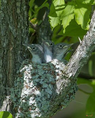 Photograph - Blue-gray Gnatcatcher Nestlings Dsb253 by Gerry Gantt