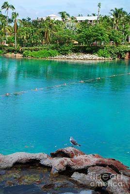 Photograph - Blue Green Lagoon by Mark Spearman