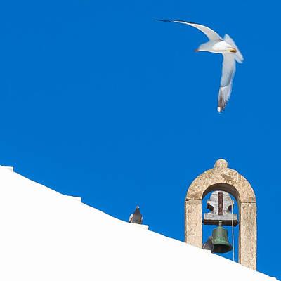 Blue Gull Art Print