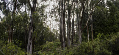 Blue Gum Eucalyptus Forest Art Print by Brad Scott