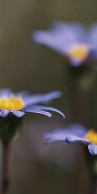 Photograph - Blue Haze II by Caitlyn  Grasso