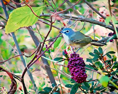 Photograph - Blue-headed Vireo by Peg Urban