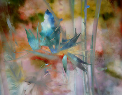 Photograph - Blue Heaven by Carol Kinkead