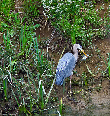 Art Print featuring the photograph Blue Heron by Brian Williamson