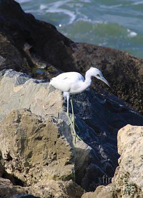 Photograph - Blue Heron  by Chris Thomas