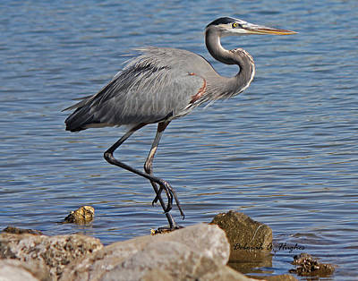 Photograph - Blue Heron by Deborah Hughes
