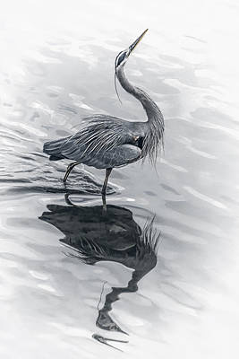 Photograph - Blue Heron Display by Wes and Dotty Weber