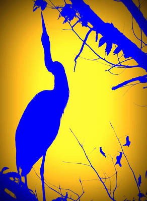 Photograph - Blue Heron In Blue by Amalia Jonas