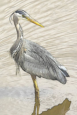 Photograph - Blue Heron In Pencil by Sonya Lang