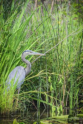 Michigan Detroit Zoo Photograph - Blue Heron by LeeAnn McLaneGoetz McLaneGoetzStudioLLCcom