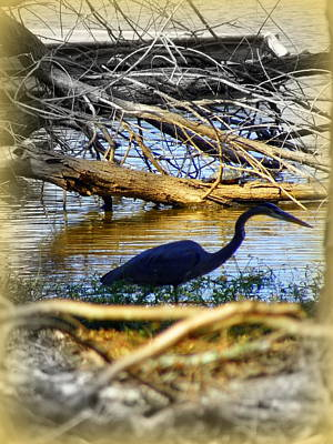 Photograph - Blue Heron by Lisa Wooten