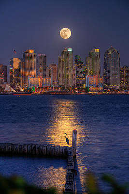San Diego Bay Photograph - Blue Heron Moon by Peter Tellone
