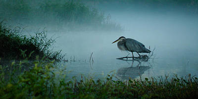 Photograph - Blue Heron Morning by Deborah Smith