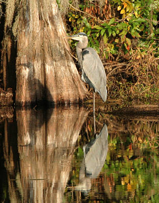 Blue Heron Reflection Art Print by Jeff Wright