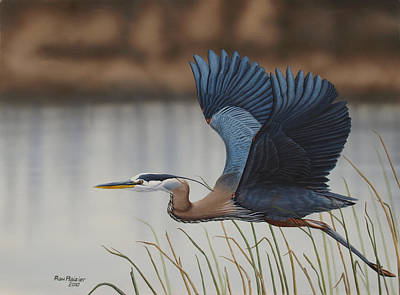 Waterfowl Painting - Blue Heron by Ron Plaizier