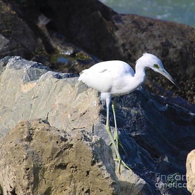 Photograph - Blue Heron Squared by Chris Thomas