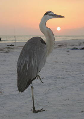 Photograph - Blue Heron Sunset by Howard Markel