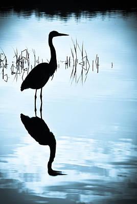 Blue Herons Art Print