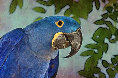 Blue Hyacinth Tapestry - Macaw Art Print