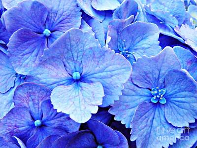 Photograph - Blue Hydrangea 3 by Sarah Loft