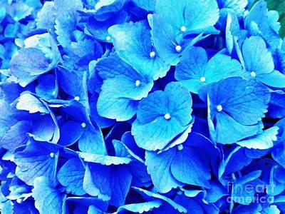 Photograph - Blue Hydrangea 4 by Sarah Loft