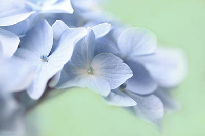 Photograph - Blue Hydrangea Flower Macro by Jennie Marie Schell