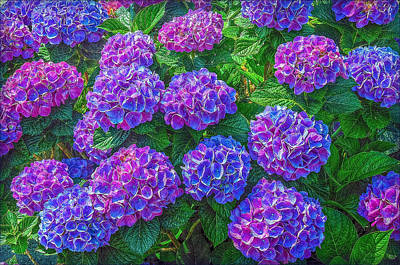 Print featuring the photograph Blue Hydrangea by Hanny Heim