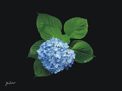 Photograph - Blue Hydrangea by Joe Duket