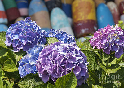 Blue Hydrangea Art Print by Juli Scalzi