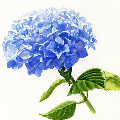 Hydrangea Watercolor Painting - Blue Hydrangea Square Design by Sharon Freeman