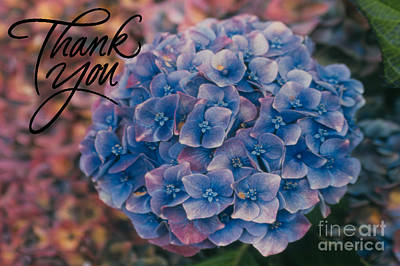 Photograph - Blue Hydrangea Thank You by Heather Kirk