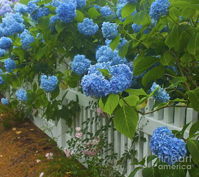 Photograph - Blue Hydrangeas by Amazing Jules