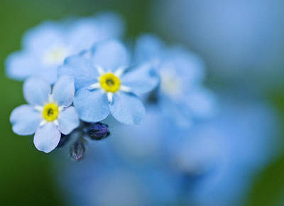 Photograph - Blue In May by Arkady Kunysz