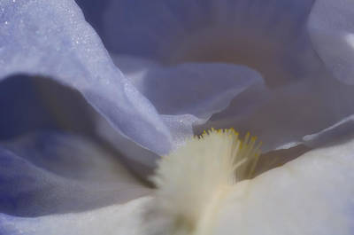 Abstract Flowers Royalty-Free and Rights-Managed Images - Blue Iris 3 by Joann Vitali