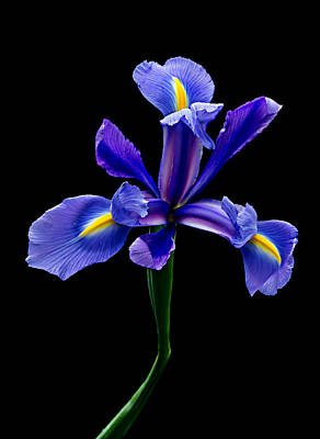 Photograph - Blue Iris Beauty by Mary Jo Allen