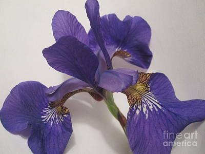 Photograph - Purple Iris Macro 4 by Tara  Shalton