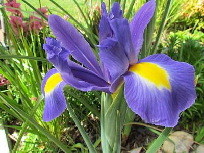 Photograph - Blue Irises  by Joyce Woodhouse