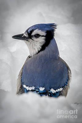 Blue Jay Alert Art Print