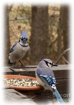 Photograph - Blue Jay Couple by Sandra Clark