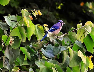 Digital Art - Blue Jay In A Tree by Chris Flees