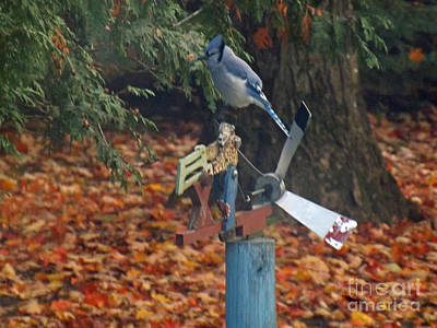 Photograph - Blue Jay On Whirly Wig by Brenda Brown