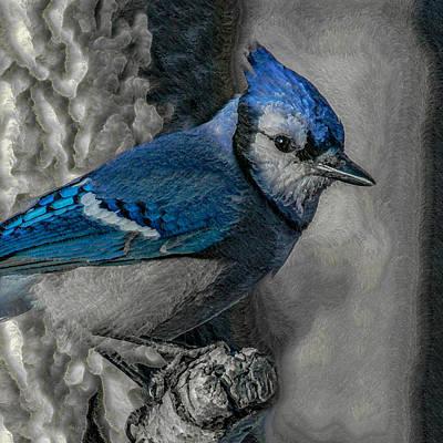 Blue Jay Digital Art - Blue Jay Painterly by Ernie Echols