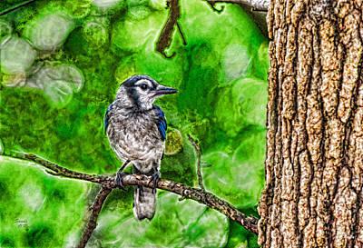 Acorn Digital Art - Blue Jay's Favorite Perch by Sandi OReilly