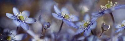 Delicate Photograph - Blue Joy by Heidi Westum