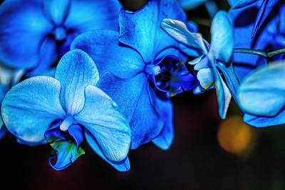 Photograph - Blue Kiss by Diana Mary Sharpton