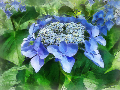 Photograph - Blue Lace Cap Hydrangea Let's Dance Starlight by Susan Savad