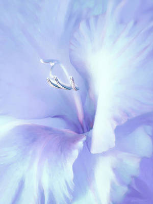 Photograph - Blue Lavender Gladiola Flower by Jennie Marie Schell