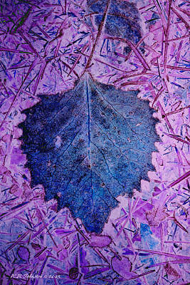 Photograph - Blue Leaf by WB Johnston