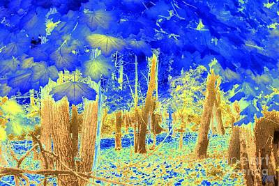 Photograph - Blue Leaves by Jeff Breiman